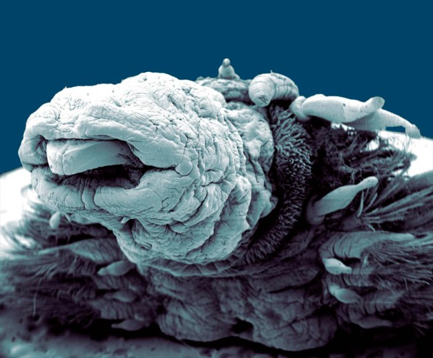 Hydrothermal Worm