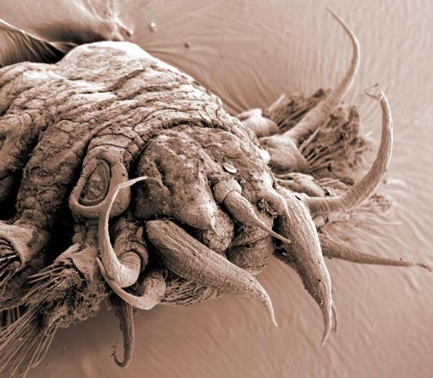 Worm Polychaete