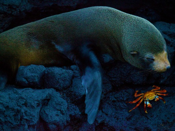 Seal & Crab